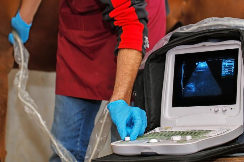 vet at a scanner